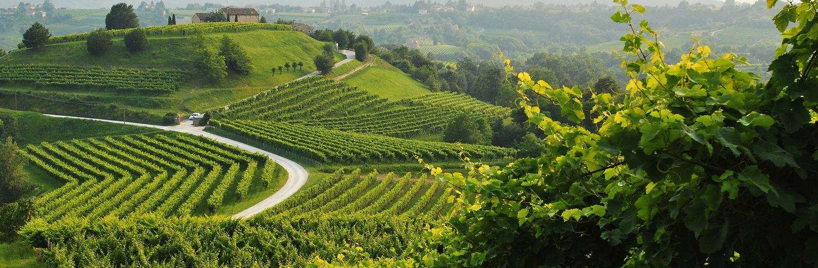 Colline-Prosecco-Treviso